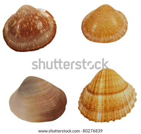 Collection Sea shells isolated on white background - stock photo