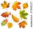 Collection set of  beautiful colourful autumn leaves isolated on white background - stock photo