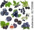 Collection set of blue purple black berries and fruits collection ,  isolated on white background - stock photo