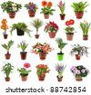 collection set of different  spring flower houseplants  in flowerpot,  isolated on white background - stock photo