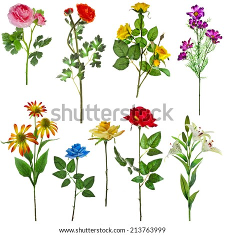 Collection set of flower lily, daisy, rose , isolated on white - stock photo