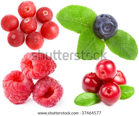 Collection set of fresh forest berries isolated on white background