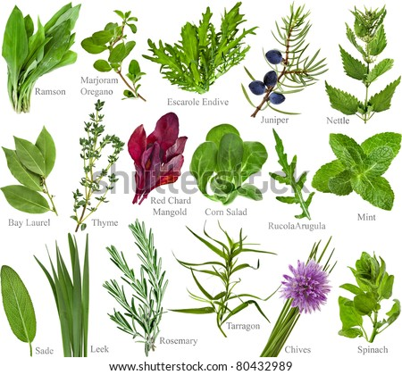 collection set of fresh herb with names isolated on a white background - stock photo