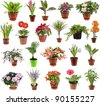 collection set of  houseplants in flower pot, isolated on white background - stock photo