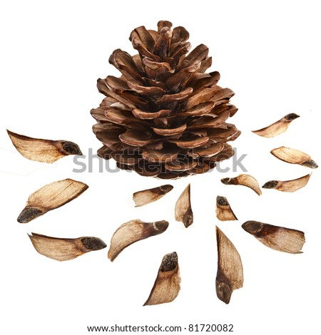 collection set  of pine fir cone with seed   isolated on white background - stock photo