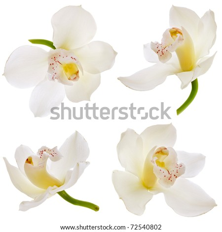 Collection set of White orchid isolated on white - stock photo