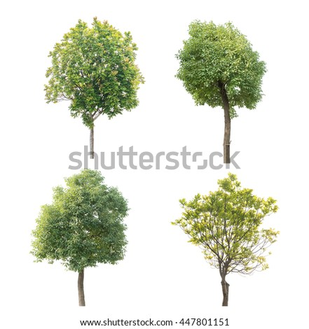 Collection tree isolated on white background - stock photo