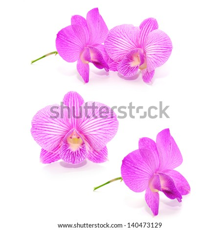 Collection Violet orchid isolated on white background - stock photo