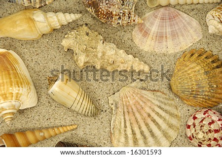 Collection with many different shells in the sand - stock photo