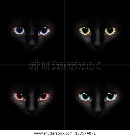 Collection with the cat faces with the different eyes - stock photo
