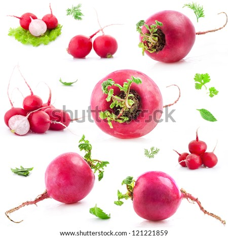 Collections of Big and small Red radish. Isolated on white background - stock photo