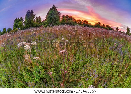 Coloful sunset in summer field with flowers. Fish-eye look - stock photo