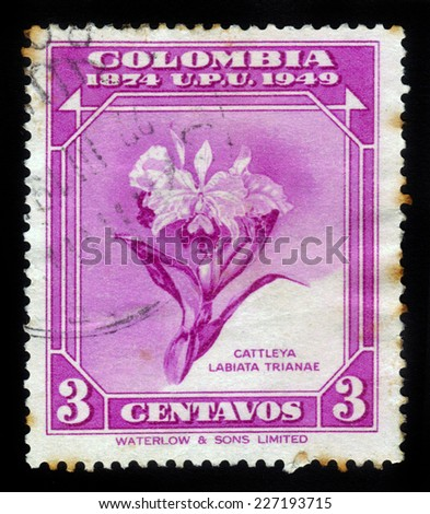 Colombia - CIRCA 1950: stamp printed by Colombia, shows flower of orchid, Cattleya trianaei - the national flower of Colombia,  circa 1950 - stock photo