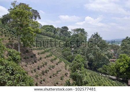 Colombian coffee plantation - stock photo