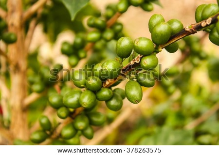 Colombian coffee plantation in the Andean valleys. Quimbaya, Quindio, Colombia. Triangle coffee. - stock photo