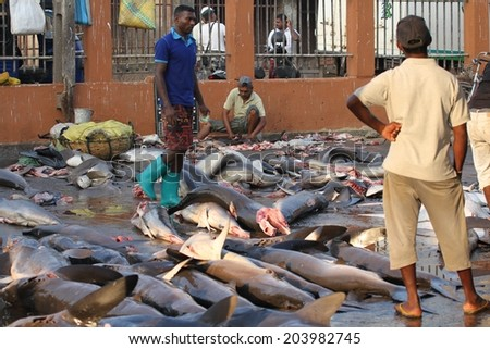 COLOMBO, SRI LANKA - MARCH 1: Fishermen and locals surrounded by fish at the morning fish market at Negombo near Coloombo, Sri Lanka on the 1st March, 2014.