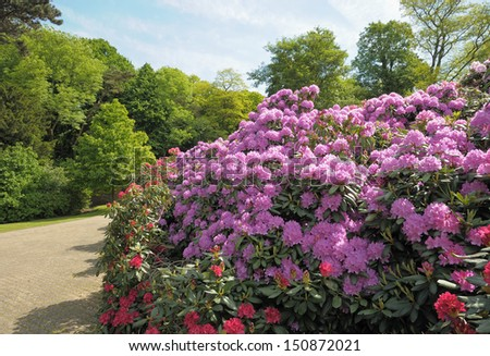 Colonial Parc in Brussels and blossoming rhododendrons  - stock photo