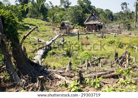 Colonist farmstead cut out of the rainforest in the Peruvian Amazon - stock photo
