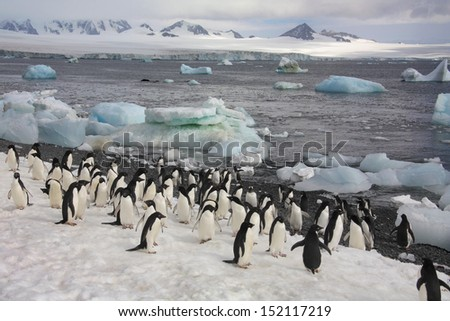 Colony of (mostly) Adelie Penguins on Paulet Island in Antarctica - stock photo