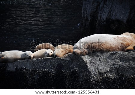 Colony of sea lions at Resurrection Bay (Alaska) - stock photo