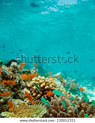 Colony of small fishes on the reef - stock photo