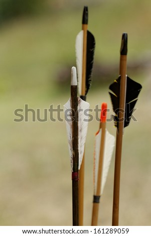 color archery arrows in nature on the ground - stock photo