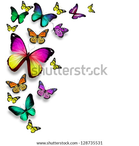 Color butterflies, isolated on white background