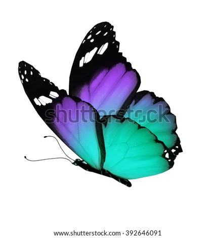 Color butterfly, isolated on white - stock photo