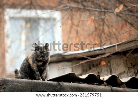 color cat on roof