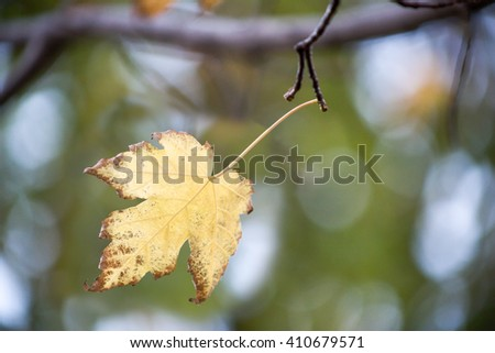 Color-changed leaf - stock photo