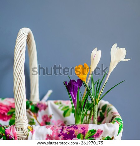 color crocus in a white a basket