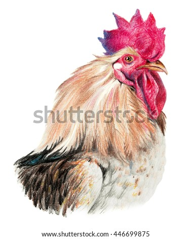 Color drawing with watercolor pencils. Head of rooster in profile on a white background. - stock photo