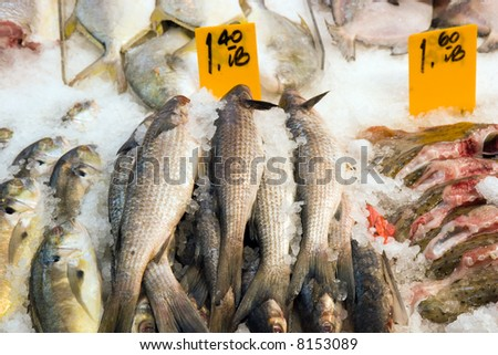 Color DSLR picture of fresh fish on white ice at fish market.  In horizontal orientation. - stock photo