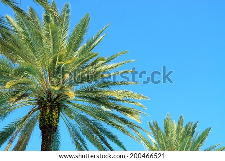 Color DSLR picture of green palm trees framing a bright, clear, blue sky.  The image is in horizontal orientation with copy space for text.  Good for framing or background. - stock photo