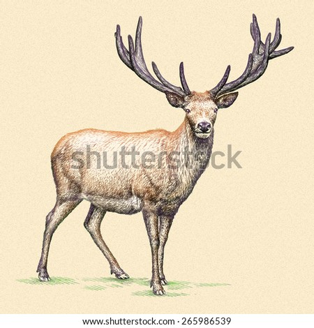 color engrave isolated deer - stock photo
