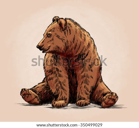 color engrave isolated grizzly bear - stock photo