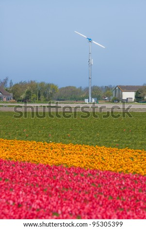 Color flower fields in Holland in the spring