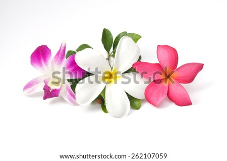 Color flower isolated on white background - stock photo