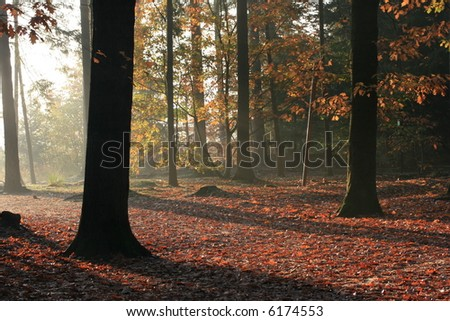 Color full autumn leafs on the trees in a Dutch forest