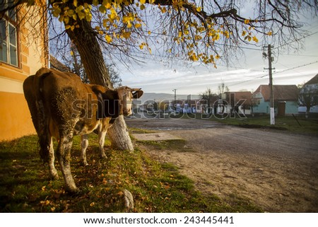 Color horizontal shot of a cow near a village road. - stock photo