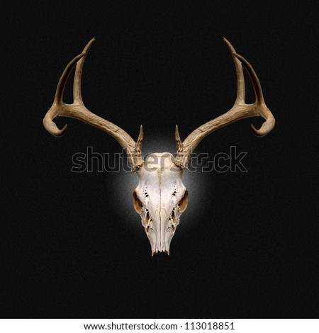 Color Image of Deer Skull on a black background - stock photo