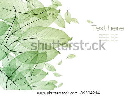 color leaf isolated - stock photo