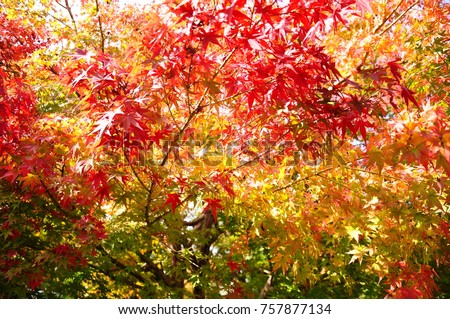 https://thumb7.shutterstock.com/display_pic_with_logo/167494286/757877134/stock-photo-color-leaves-in-japan-757877134.jpg