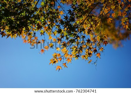 https://thumb7.shutterstock.com/display_pic_with_logo/167494286/762304741/stock-photo-color-leaves-in-japan-762304741.jpg