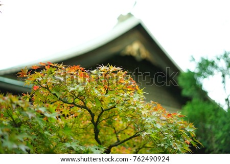 https://thumb7.shutterstock.com/display_pic_with_logo/167494286/762490924/stock-photo-color-leaves-in-japan-762490924.jpg