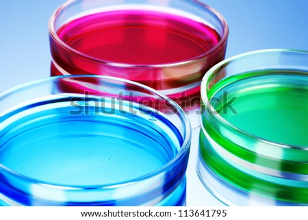 color liquid in petri dishes on blue background - stock photo