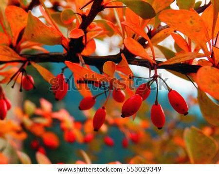 color macro photography of red autumnal berries