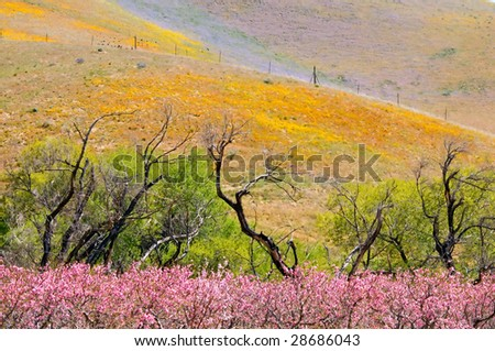 Color of Spring - stock photo