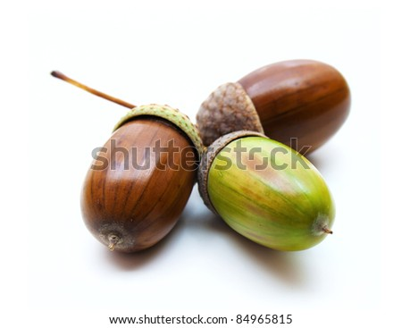 Color photo of acorns on a white background - stock photo