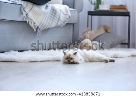 Color-point cat lying on a floor in living room - stock photo